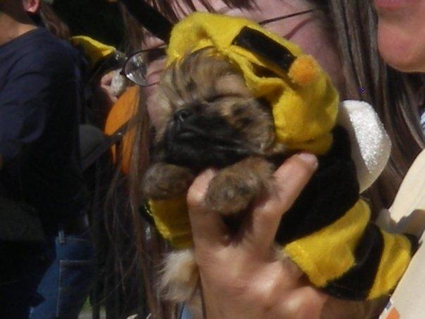 petcostume-5-week-puppy-salem