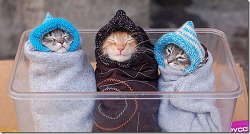 Can Cat Get Vaccinated With A Cold