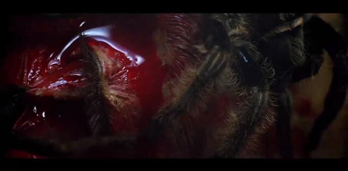 the beyond fulci l'aldila 1981 spiders tarantulas